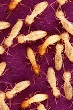 Insect Journal Termites Feed Entomology