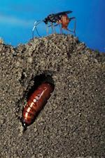 Insect Journal Wasp Lays Egg Earworm Pupal Tunnel Entomology