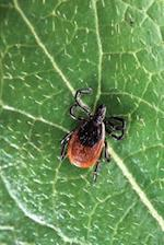 Arachnid Journal Deer Tick Arachnology