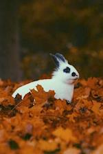 A Black and White Rabbit Sitting in Some Orange Leaves in Autumn Journal