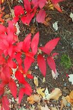 Journal Autumn Foliage Fall Colors