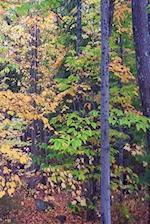 Journal Autumn Foliage Fall Forest