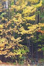 Journal Fall Colors Yellow Leaves