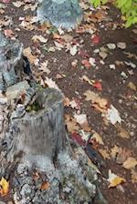 Journal Fall Foliage Leaves Ground Tree Stump