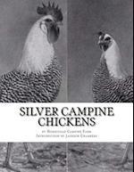 Silver Campine Chickens