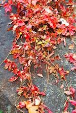 Journal Fall Colors Vines Leaves Rock