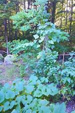 Journal Backyard Summer Garden Forest Edge