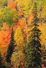 Journal Fall Foliage Valley Autumn Season