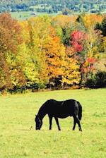 Journal Grazing Black Horses in Autumn Equine