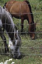Journal Grazing Horses Equine