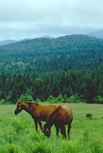 Journal Grazing Horses Mountain Backdrop Equine