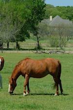 Journal Grazing Horses Scene Equine