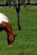 Journal Grazing Pinto Equine Horse