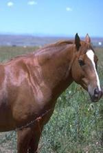 Journal Horse Pasture Scene Equine