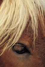 Journal Horse White Mane Equine