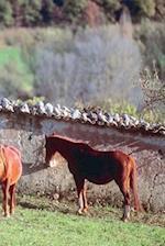 Journal Horses Pasture Equine