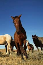 Journal Horses Shadows Equine