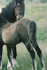 Journal Mare Foal Equine Horse