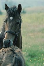 Journal Mare Foal Grooming Each Other Equine Horses