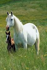 Journal Mare Foal Tall Grass Equine Horse