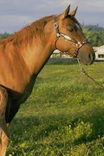 Journal Nursing Foal Equine Horse