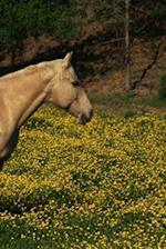 Journal Palomino Yellow Flowers Equine Horse