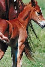Journal Pinto Mare Foal Equine Horses