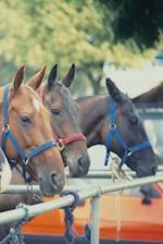 Journal Polo Pony String Equine Horses