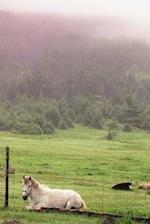 Journal Resting Pasture Horses Equine