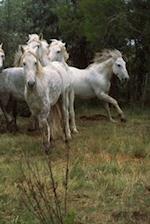 Journal Running Grey Horses Herd Equine