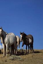 Journal Standing Horses Western Pasture Equine
