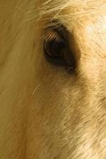 Journal White Horse Closeup Equine