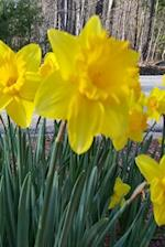 Journal Spring Yellow Daffodils