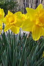 Journal Daffodils Spring Flowers