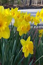 Floral Journal Spring Summer Flowers Daffodils
