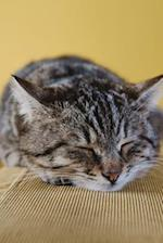 Adorable Gray and Black Striped Cat Napping on the Sofa Journal