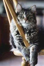 Gray and Black Striped Cat on a Chair Portrait Pet Journal