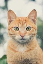 Charming Orange Ginger Cat with Green Eyes Pet Journal