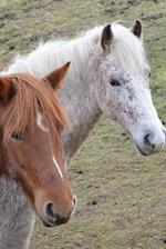Two Horses Are Looking at You Equestrian Journal
