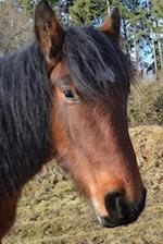A Captivating Brown Horse with a Black Mane Portrait Equestrian Journal