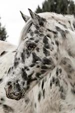 Appaloosa Horse Portrait Equestrian Journal