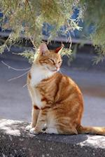 Captivating Orange and White Cat on a Wall Journal