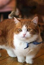 Orange and White Munchkin Cat Journal