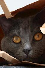 Gray Chartreux Cat Peeking Out of a Paper Bag Pet Journal