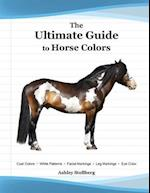 The Ultimate Guide to Horse Colors