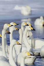 Winter Theme Journal Gaggle Geese