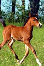 Such an Adorable Brown Colt in a Pasture Horse Journal