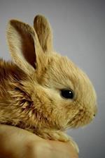 Sweet Brown Baby Bunny Rabbit Pet Journal