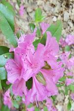 Floral Journal Springtime Beauty