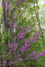 Journal Early Spring Lilac Branches